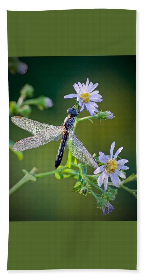 Dragonfly Beach Towel featuring the photograph Dragonfly by Rebecca Samler