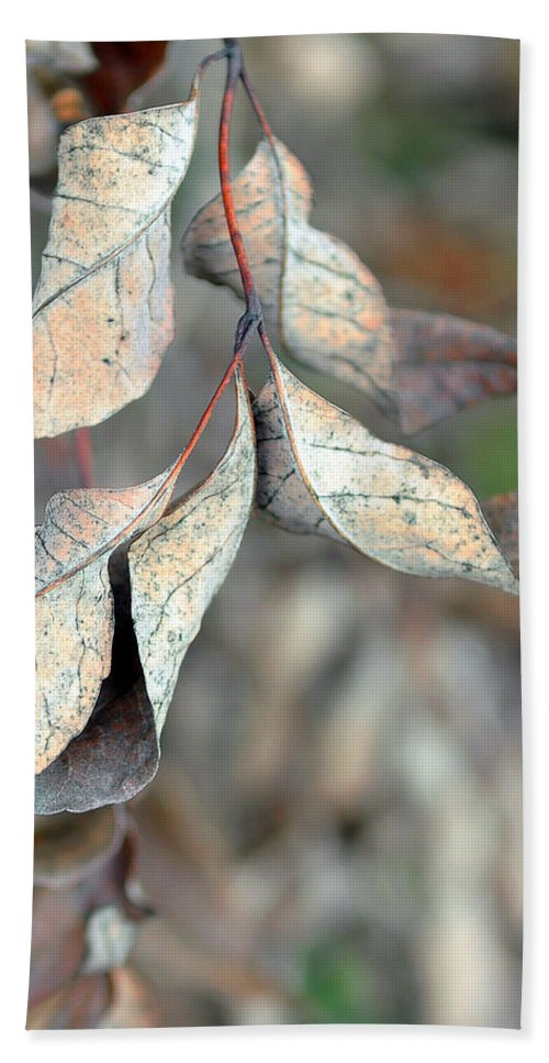 Nature Beach Towel featuring the photograph Dry Leaves by Lisa Phillips