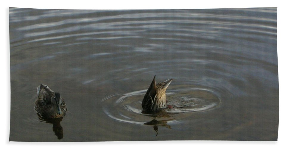 Lakes Beach Towel featuring the photograph Duck Butt 1560 by Guy Whiteley