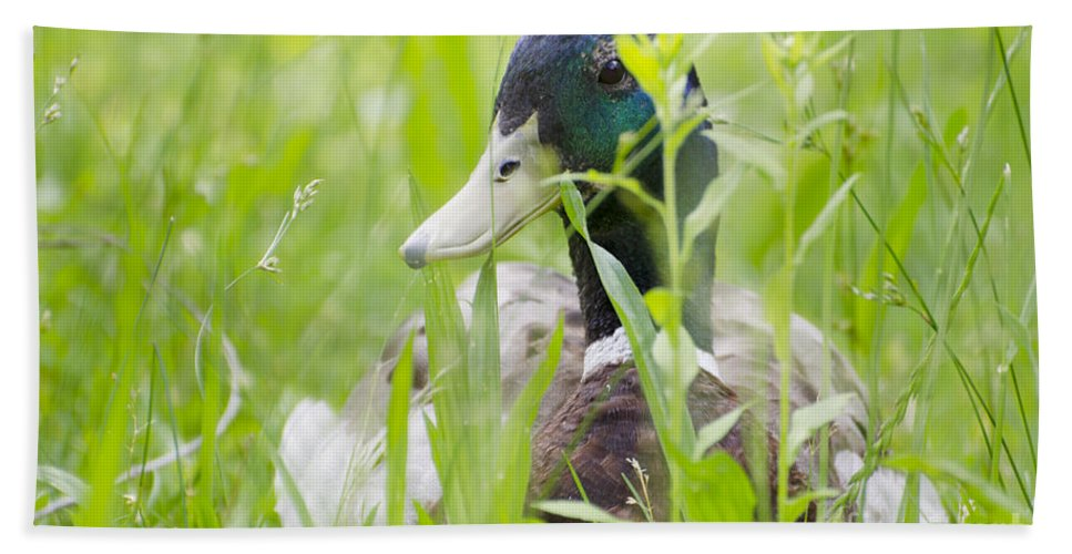Duck Beach Towel featuring the photograph Duck In The Green Grass by Mats Silvan