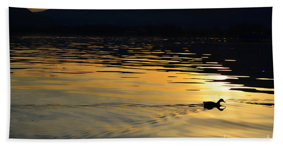 Duck Beach Towel featuring the photograph Duck Swimming by Mats Silvan