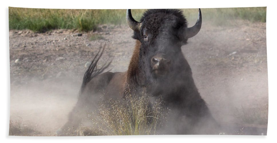 Bison Beach Towel featuring the photograph Dust Bunny by James Anderson