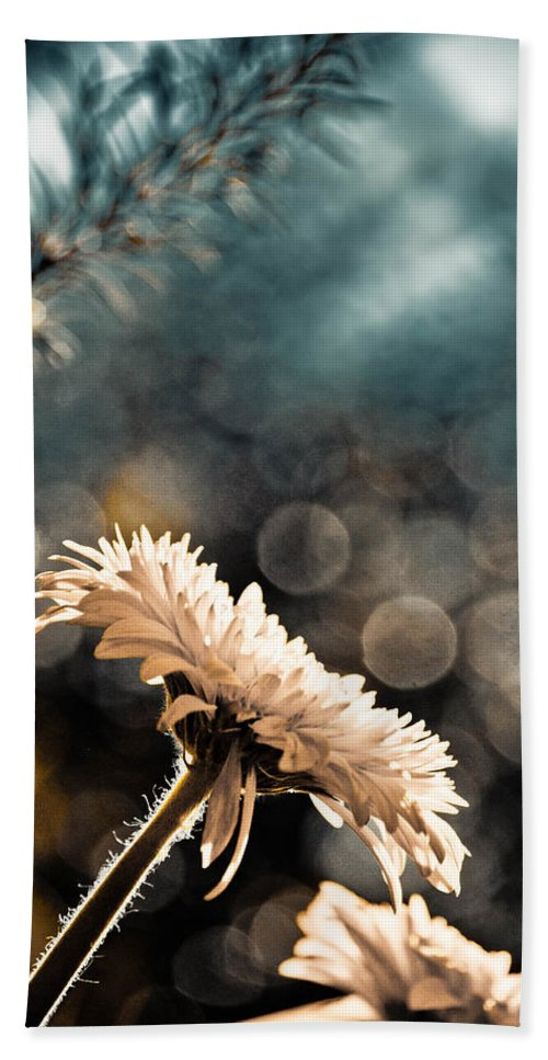 Dahlia Beach Towel featuring the photograph Eagles Need Help by Trish Tritz