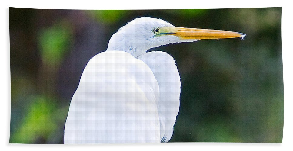 Preening Beach Towel featuring the photograph Egret Preening by Scott Hansen