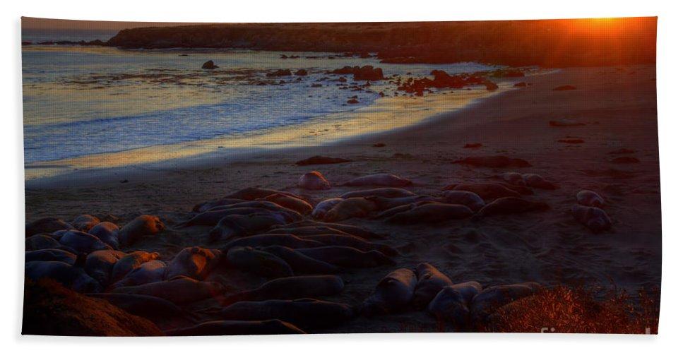San Simeon Beach Towel featuring the photograph Elephant Rocks by James Anderson