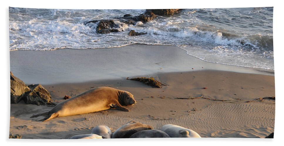 Oceans Beach Towel featuring the photograph Elephant Seals At Piedras Blancas by Lynn Bauer