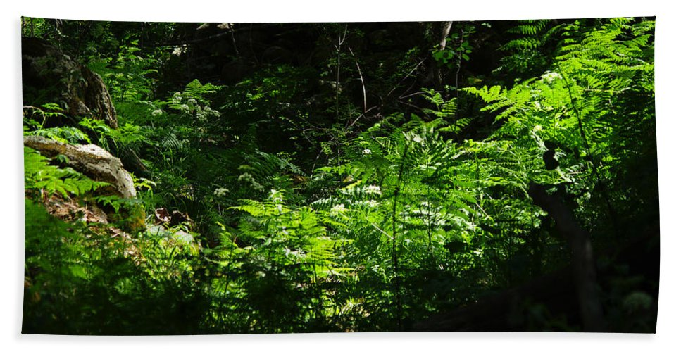 Signal Peak Beach Towel featuring the photograph Escape by Vicki Pelham