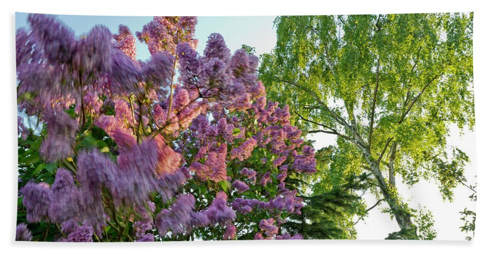 Foliage Beach Towel featuring the photograph Evening Lilac by Gary Eason
