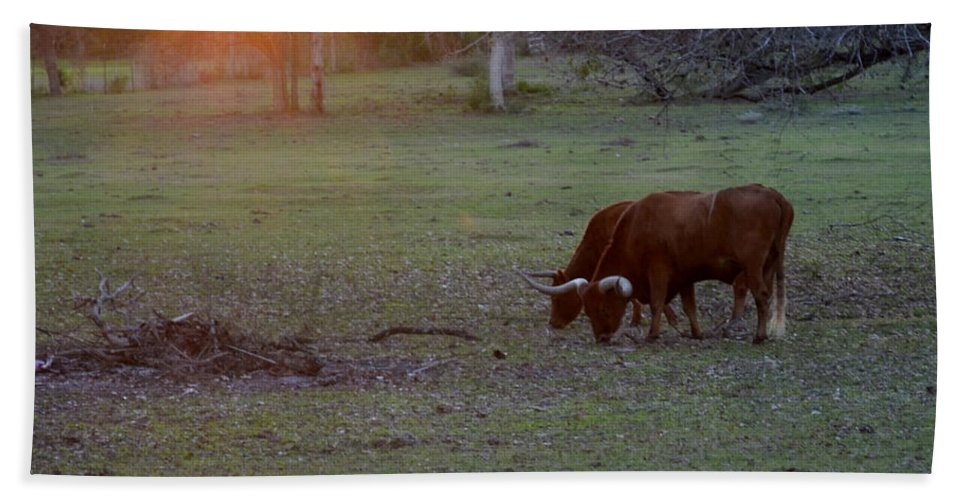Cow Beach Towel featuring the photograph Evening Meal by Donna Brown