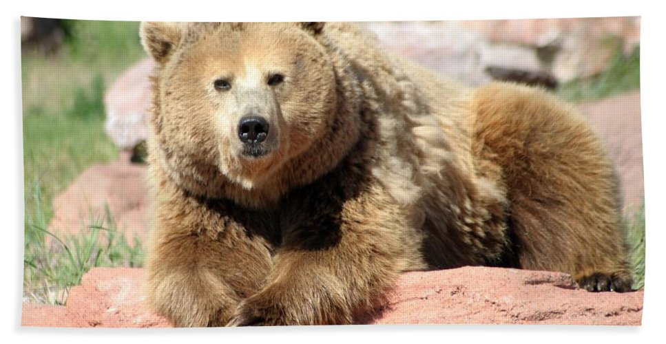 Bear Beach Towel featuring the photograph Eye To Eye by Living Color Photography Lorraine Lynch