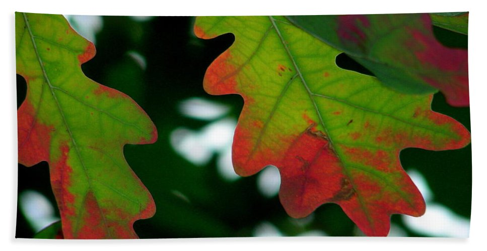 Leaves Beach Towel featuring the photograph Fall L Eaves by Mark Gilman