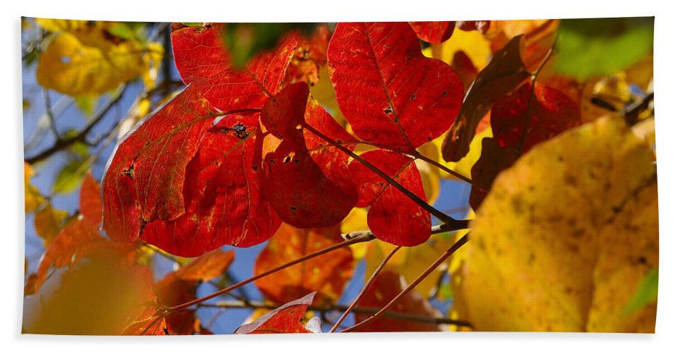 Fall Beach Towel featuring the photograph Fall Leaves Flp by Jim Brage