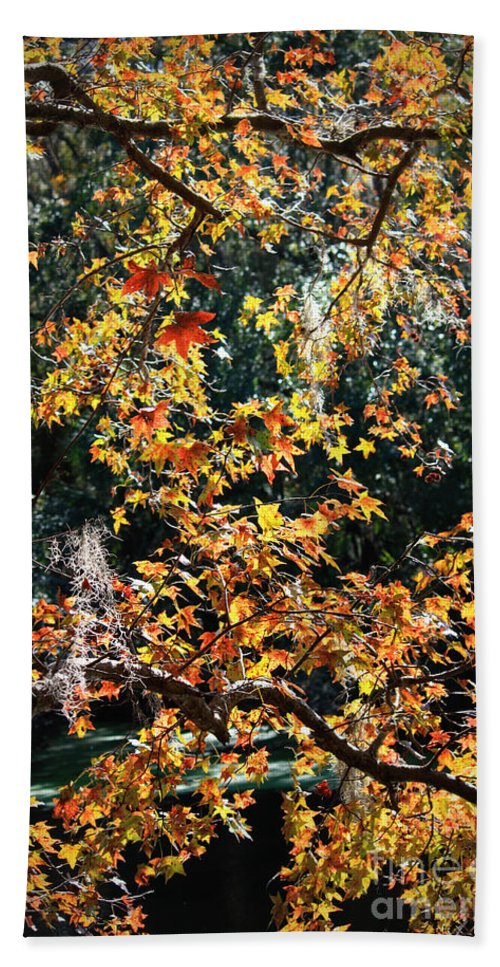 Fall Leaves Beach Towel featuring the photograph Fall Leaves Over Florida Pond by Carol Groenen