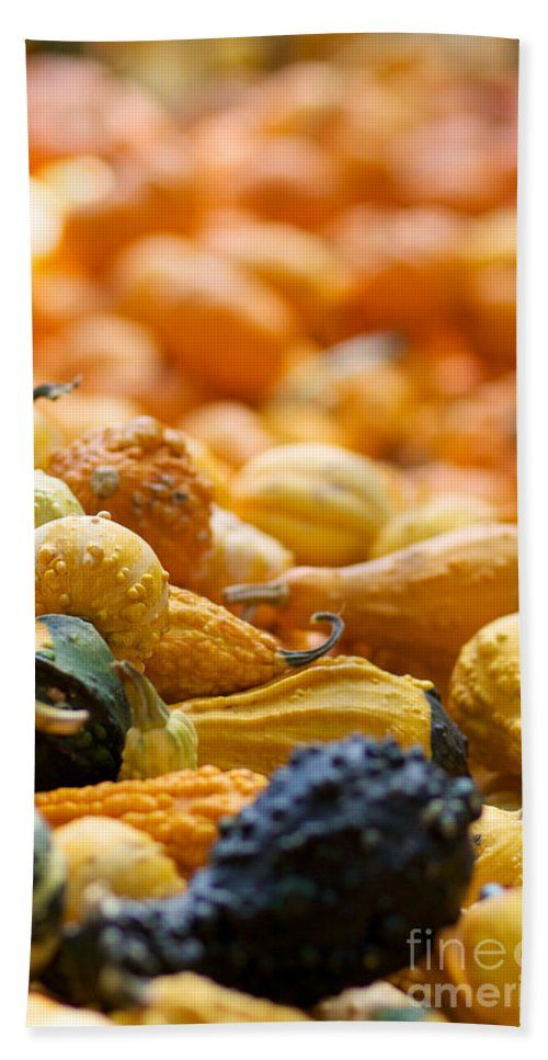 Fall Squash Beach Towel featuring the photograph Fall Squash Variety by Brooke Roby