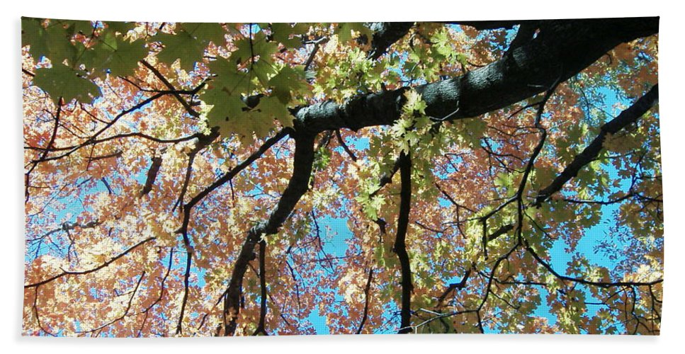 Trees Turning Fall Colors Beach Towel featuring the photograph Falls Coming by Karen Capehart