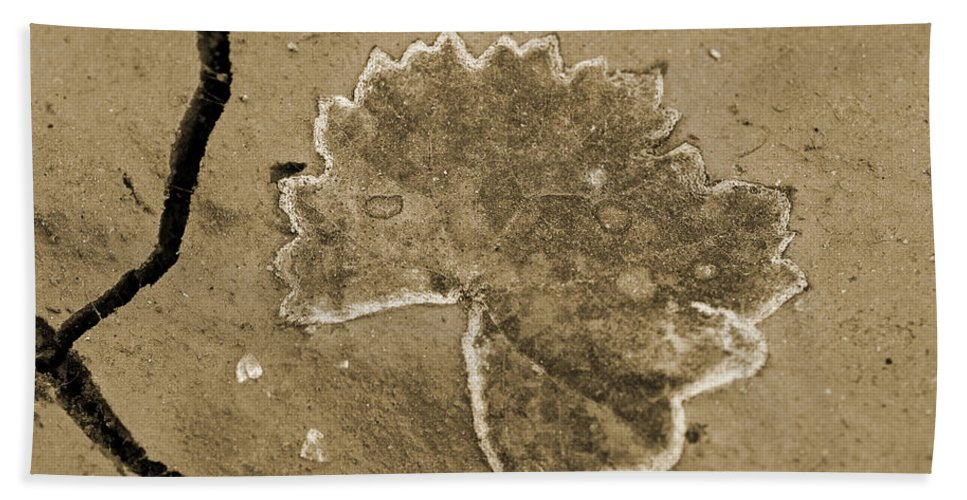 Leaf Beach Towel featuring the photograph Faux Fossil by Christine Stonebridge