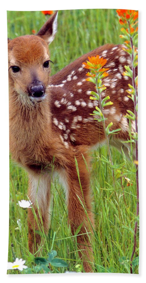 White-tailed Deer Beach Towel featuring the photograph Fawn In Flowers by Larry Allan