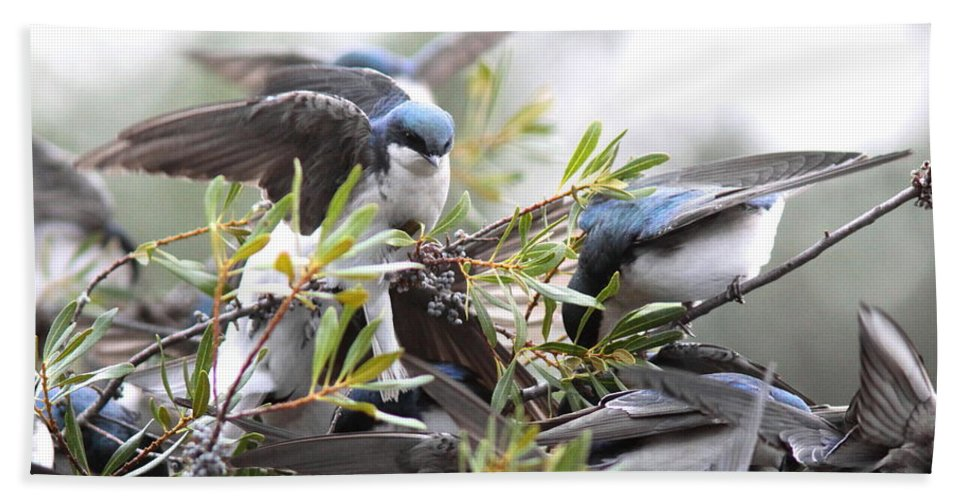 Tree Swallows Beach Towel featuring the photograph Feeding Frenzy by Travis Truelove