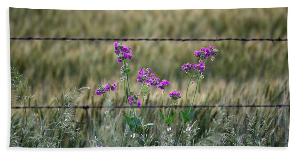 Barbed Beach Towel featuring the photograph Fence And Flowers by Andrew Dyer Photography