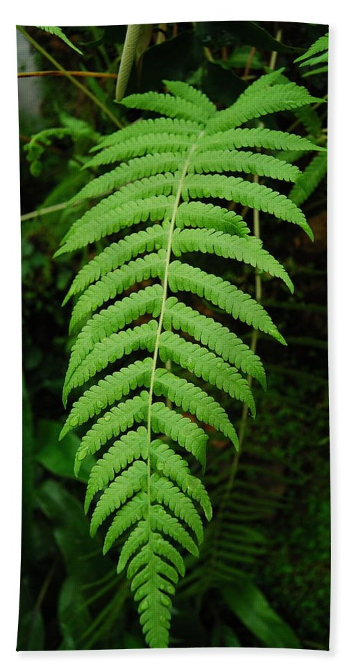 Fern Beach Towel featuring the photograph Fern Frond 0576 by Michael Peychich