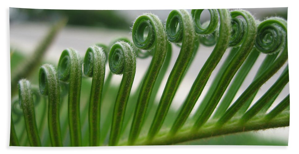 Fern Fronds Beach Towel featuring the photograph Fern Fronds Macro by Nikki Marie Smith