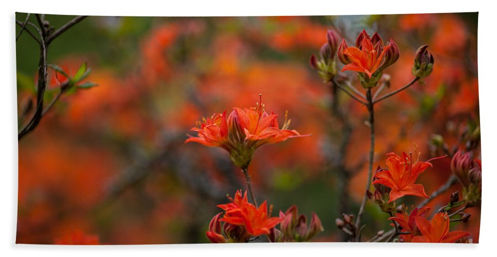 Rhodies Beach Towel featuring the photograph Fiery Spring by Mike Reid