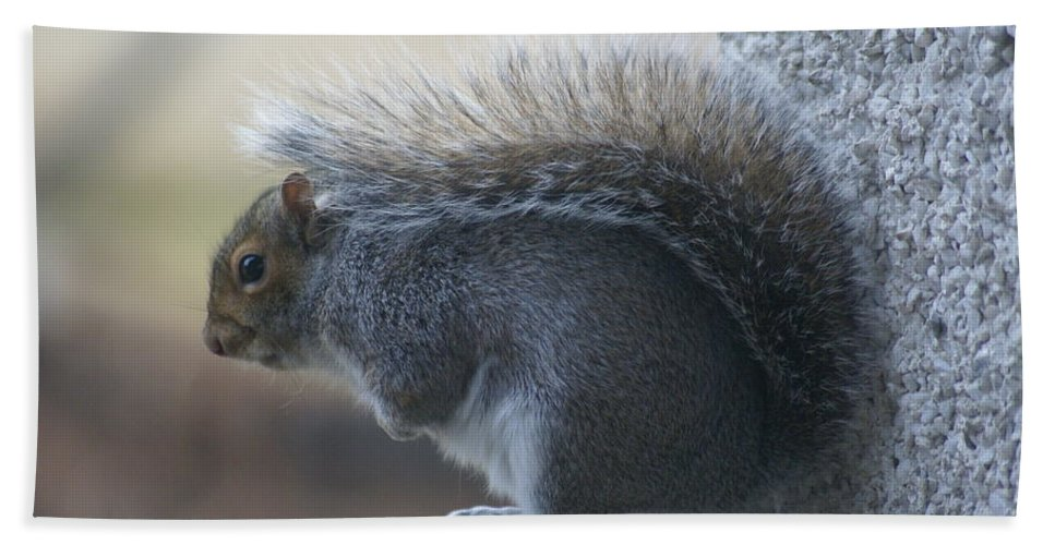 Squirrels Beach Towel featuring the photograph Fighting The Wind Chill by Ben Upham III