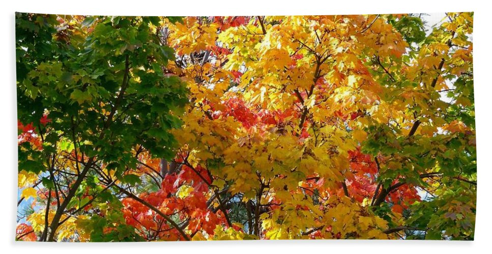 Fine Fall Foliage Beach Towel featuring the photograph Fine Fall Foliage by Will Borden