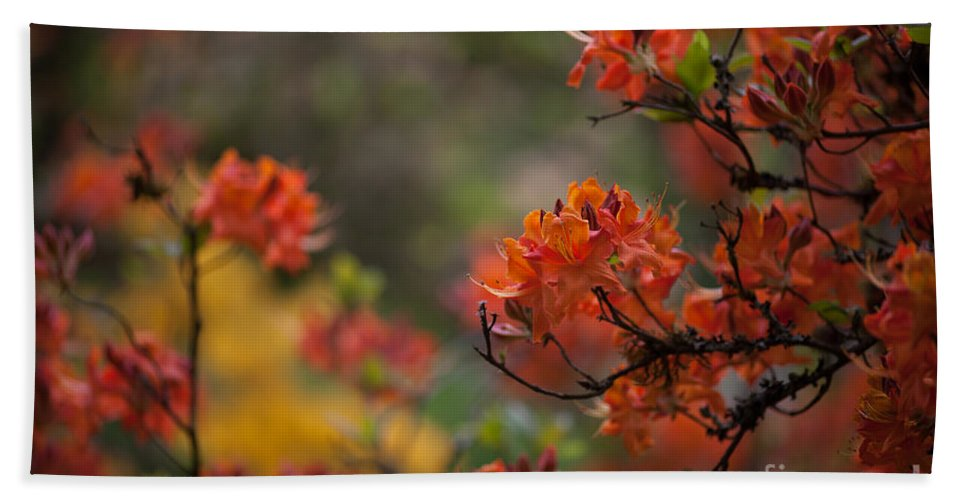 Rhodies Beach Towel featuring the photograph Firestorm by Mike Reid
