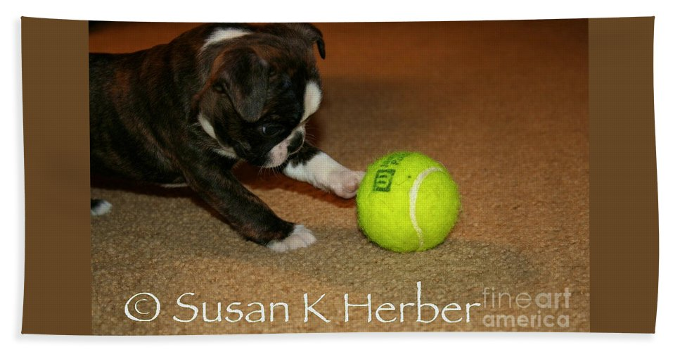 Boston Terrier Beach Towel featuring the photograph First Ball by Susan Herber