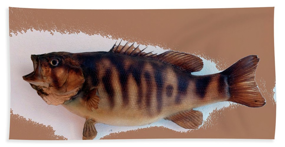Animals Beach Towel featuring the photograph Fish Mount Set 11 B by Thomas Woolworth