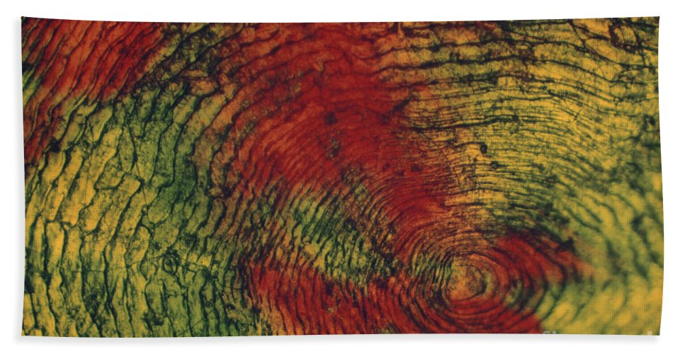 Nature Beach Towel featuring the photograph Fish Scale by Eric V. Grave