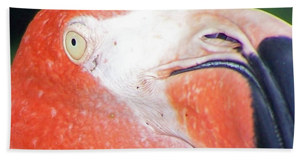Flamingo Beach Towel featuring the photograph Flamingo Nose by Christy Leigh