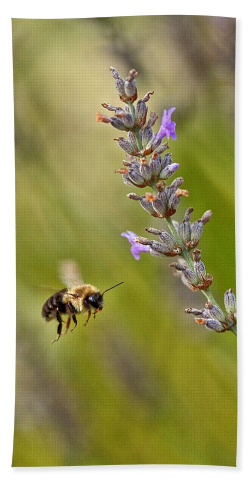 Bumble Bee Beach Towel featuring the photograph Flight Of The Bumble by Karol Livote