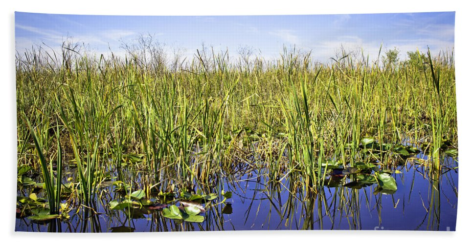 Florida Beach Towel featuring the photograph Florida Everglades 5 by Madeline Ellis