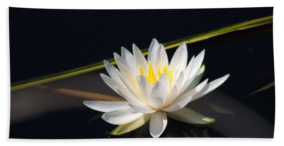 Water Lilly Beach Towel featuring the photograph Flower Of The Marsh by Anthony Walker Sr