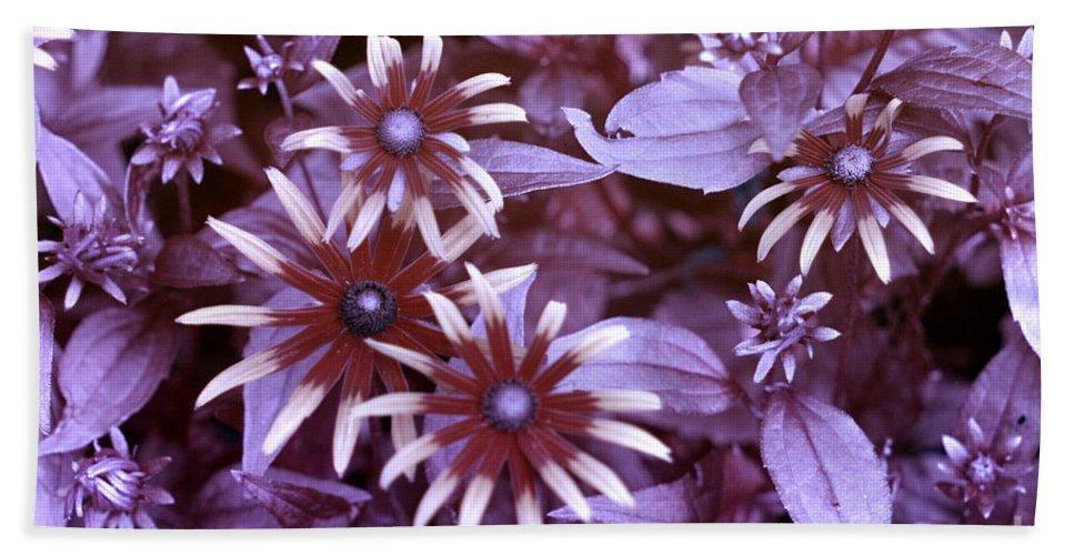 Black Eyed Susan Beach Towel featuring the photograph Flower Rudbeckia Fulgida In Uv Light by Ted Kinsman