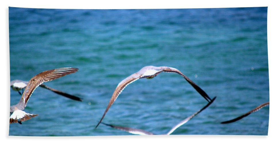 Seagulls Beach Towel featuring the photograph Fly Away Home by Kari Tedrick