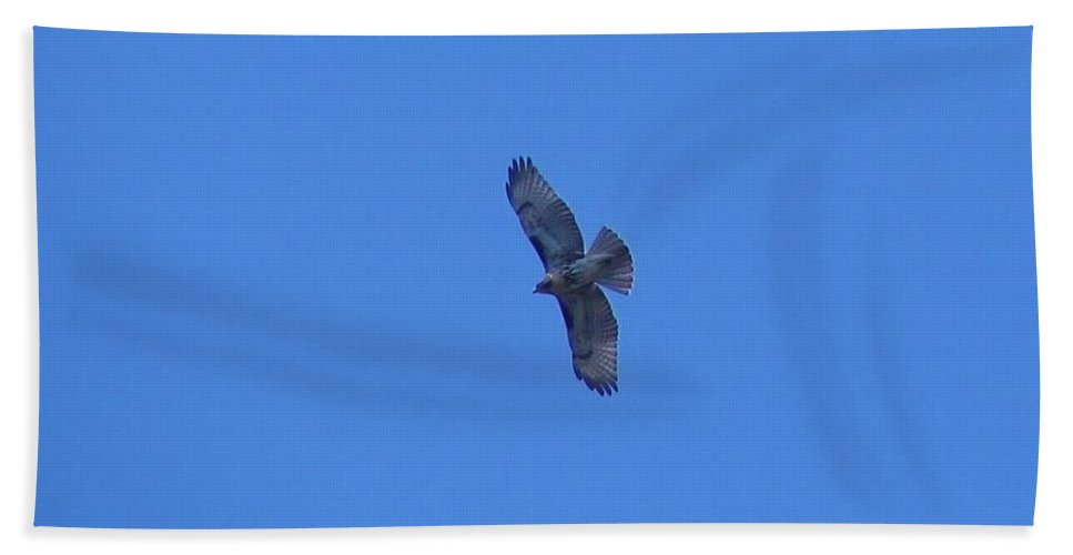 Red Beach Towel featuring the photograph Fly High by Art Dingo