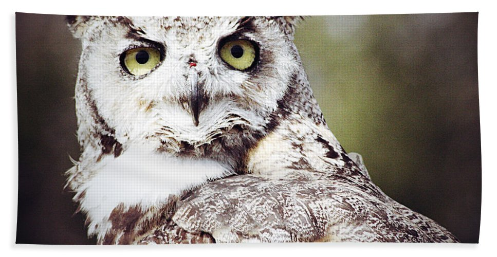 Elm Framed Prints Framed Prints Beach Towel featuring the photograph Followed Owl by The Artist Project