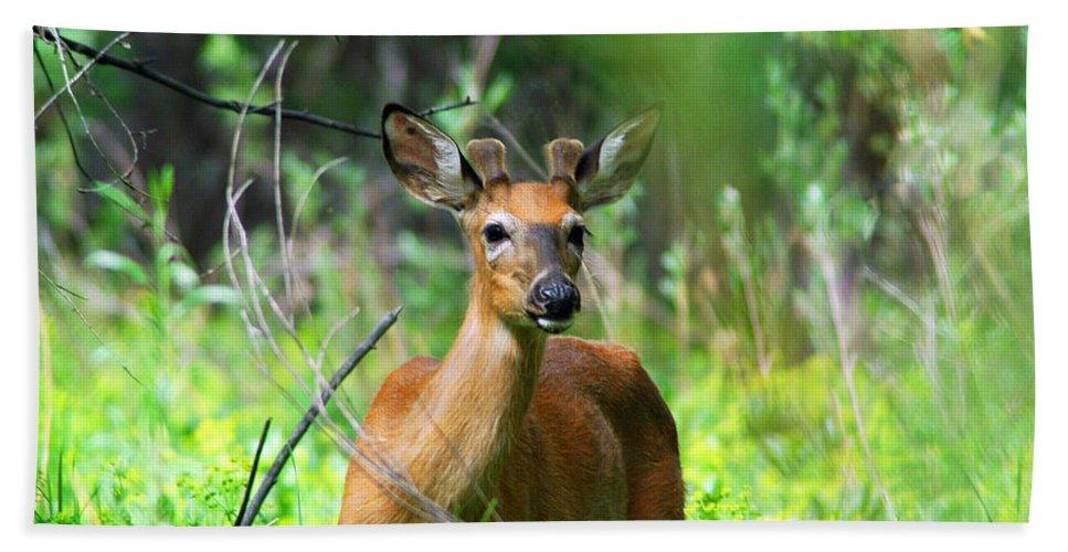 Deer Beach Towel featuring the photograph Forest Buck by Lynn Bauer