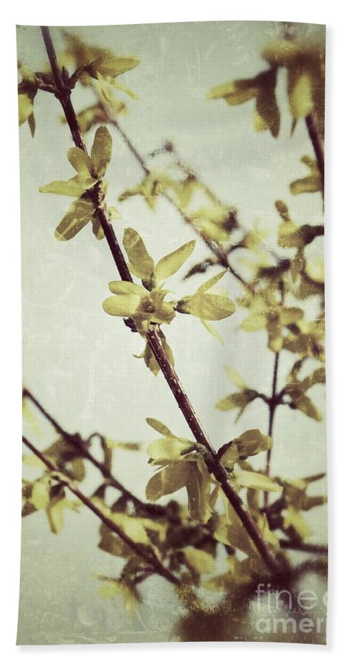 Forsythia Beach Towel featuring the photograph Forsythia by Traci Cottingham