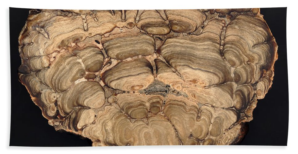 Stromatolite Beach Towel featuring the photograph Fossil Stromatolite by Ted Kinsman