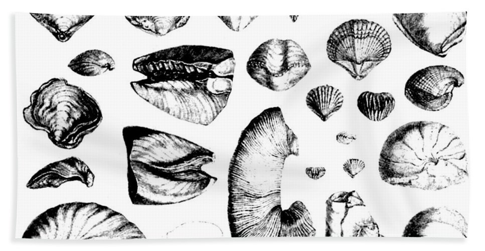 Art Beach Towel featuring the photograph Fossilized Shells, 1844 by Science Source