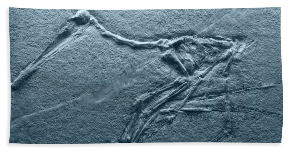 Jurassic Beach Towel featuring the photograph Fossils - Pterosaurs by Heiko Koehrer-Wagner
