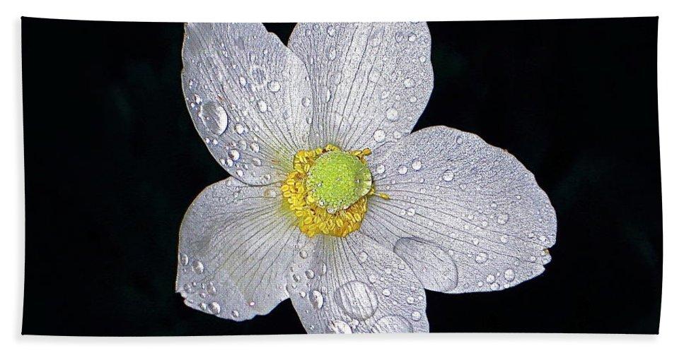 Anemone Beach Towel featuring the photograph Garden Jewel And Rain by Byron Varvarigos