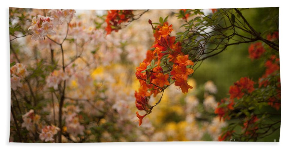 Rhodies Beach Towel featuring the photograph Gathering Of Radiance by Mike Reid
