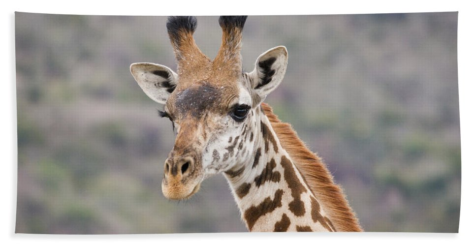 Africa Beach Towel featuring the photograph Giraffe Close-up by Howard Kennedy