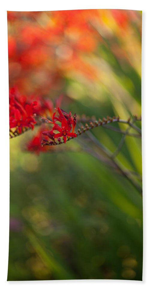 Flower Beach Towel featuring the photograph Glorious Red by Mike Reid