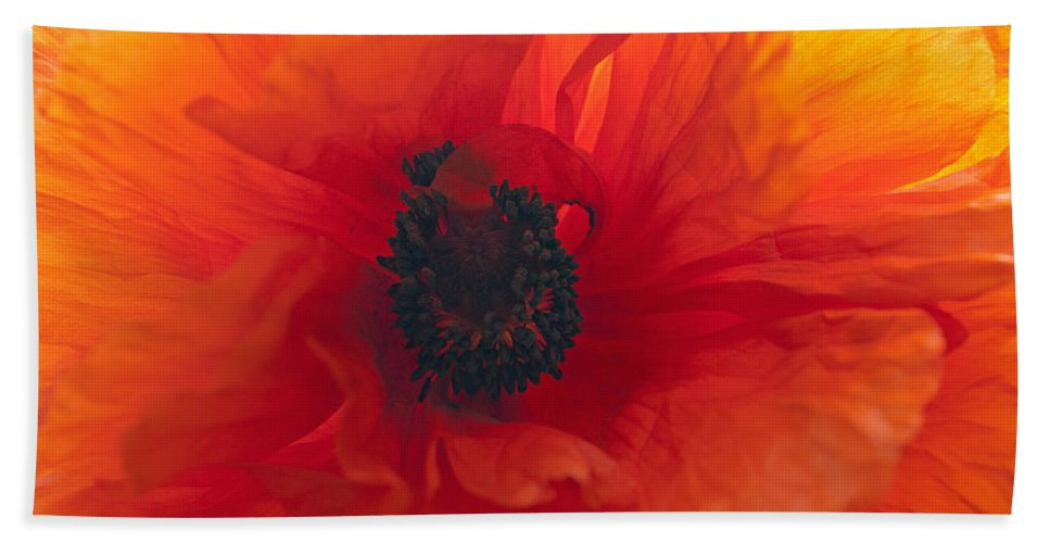 Flower Beach Towel featuring the photograph Glowing Poppy by Tikvah's Hope
